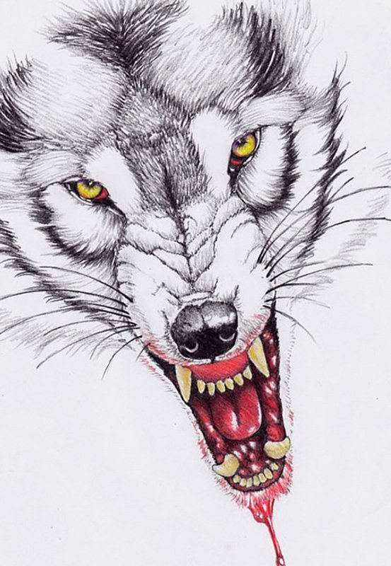 Cool yellow-eyed wolf with blooded mouth tattoo design