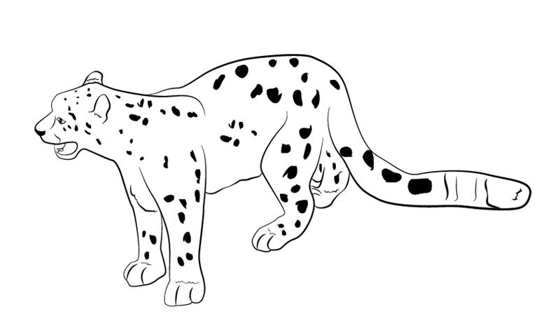 Coot cartoon outline cheetah tattoo design