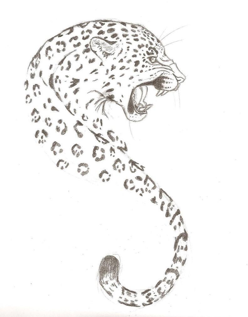 Crazy grey penilwork roaring jaguar tattoo design