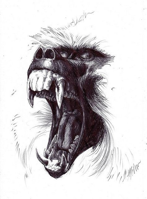Crazy pencilwork crying baboon face tattoo design