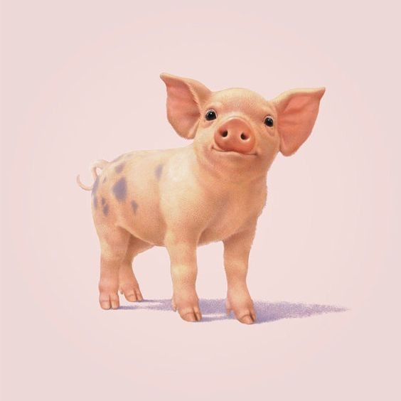 Cute Colored Smiling Pig Baby Tattoo Design Tattooimages Biz