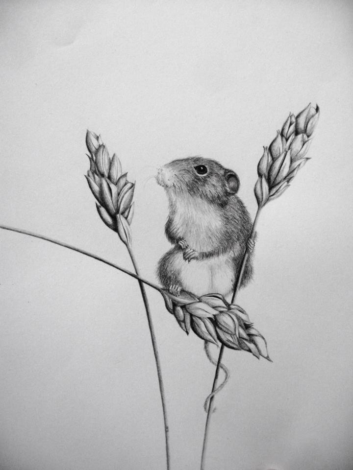 cute grey mouse and wheat stems tattoo design tattooimages biz