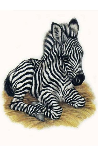 Cute resting zebra baby tattoo design