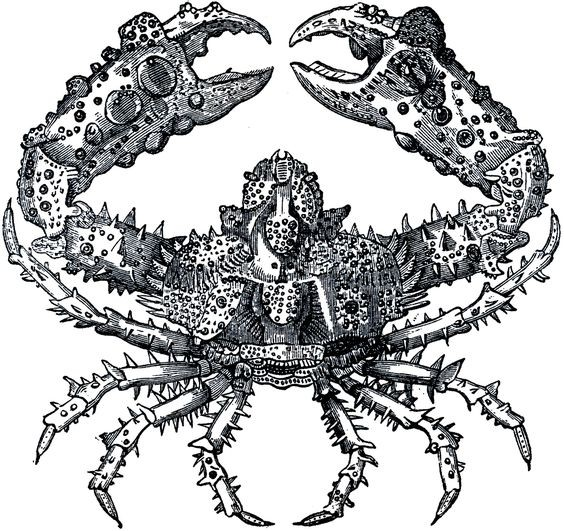 Dangerous grey-ink spiny crab tattoo design