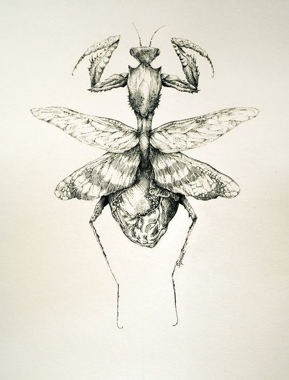 Dangerous grey-ink wild bug with heart-shaped lower part tattoo design