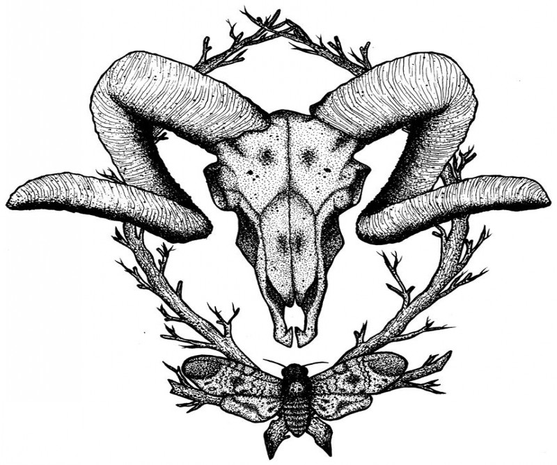 Dotwork ram skull with moth and crossed branches tattoo design