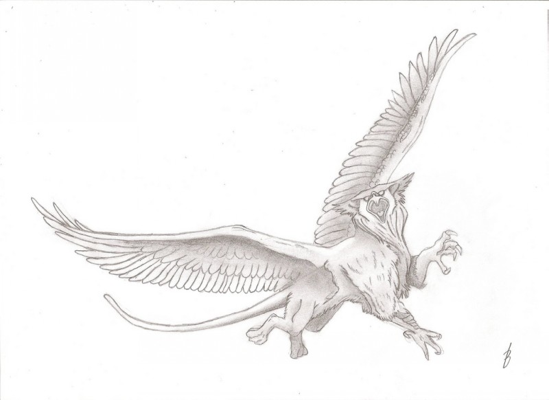 Exiting grey crying griffin with large wings tattoo design
