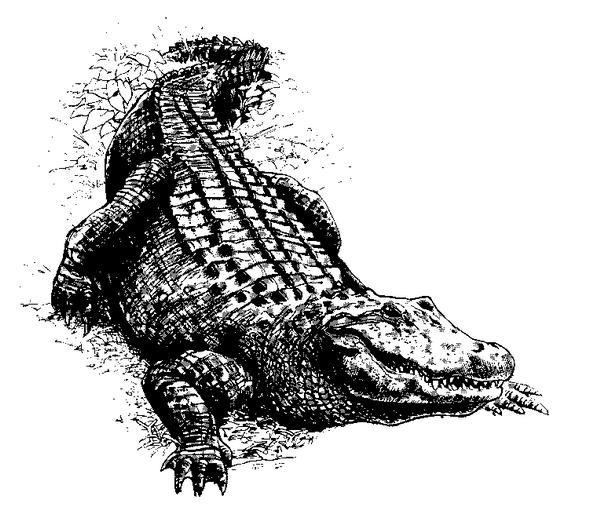 Fabulous black-an-white crawling reptile tattoo design