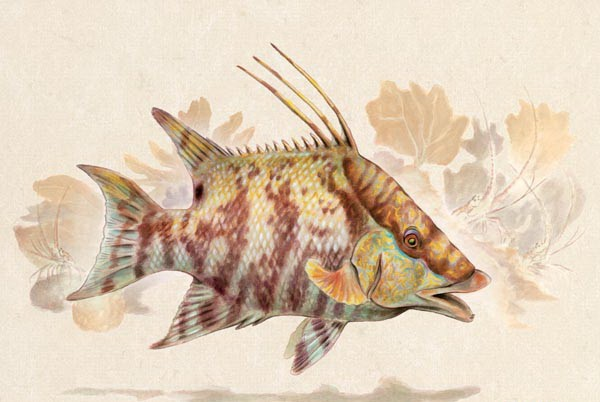 Fantastic colorful swimming water animal on weeds background tattoo design