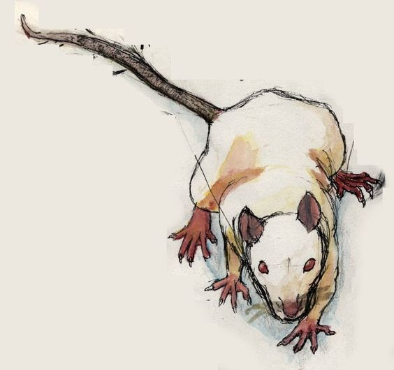 Fat white drawing rodent tattoo design