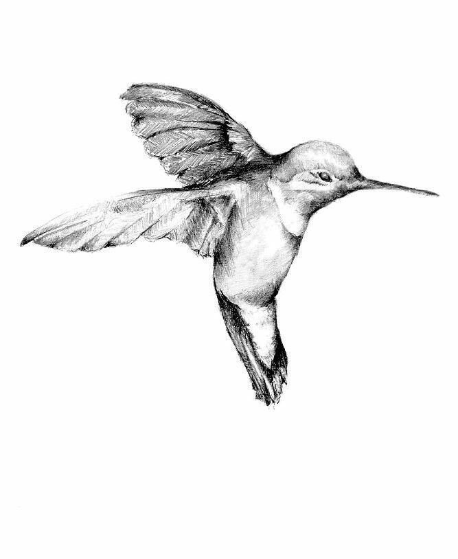 Fine black-and-white hummingbird bird tattoo design