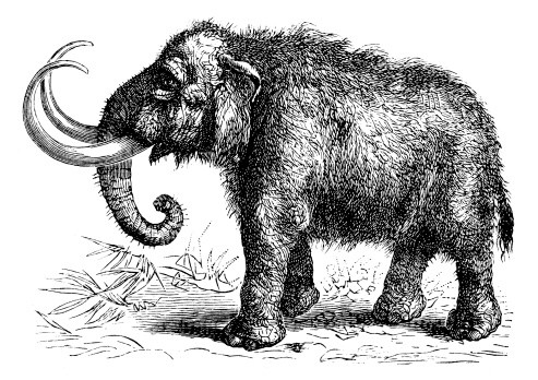Fine fluffy grey-ink mammoth on nature view background tattoo design