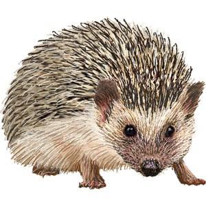 Fine hedgehog in brown colors tattoo design