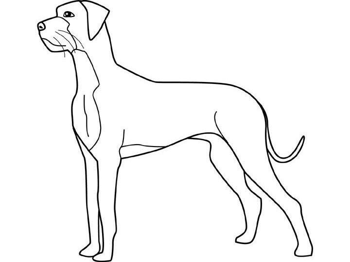 Fine outline dog tattoo design