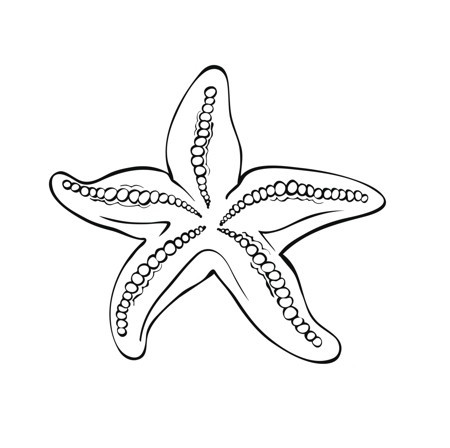 Fine uncolored starfish with beaded veins tattoo design