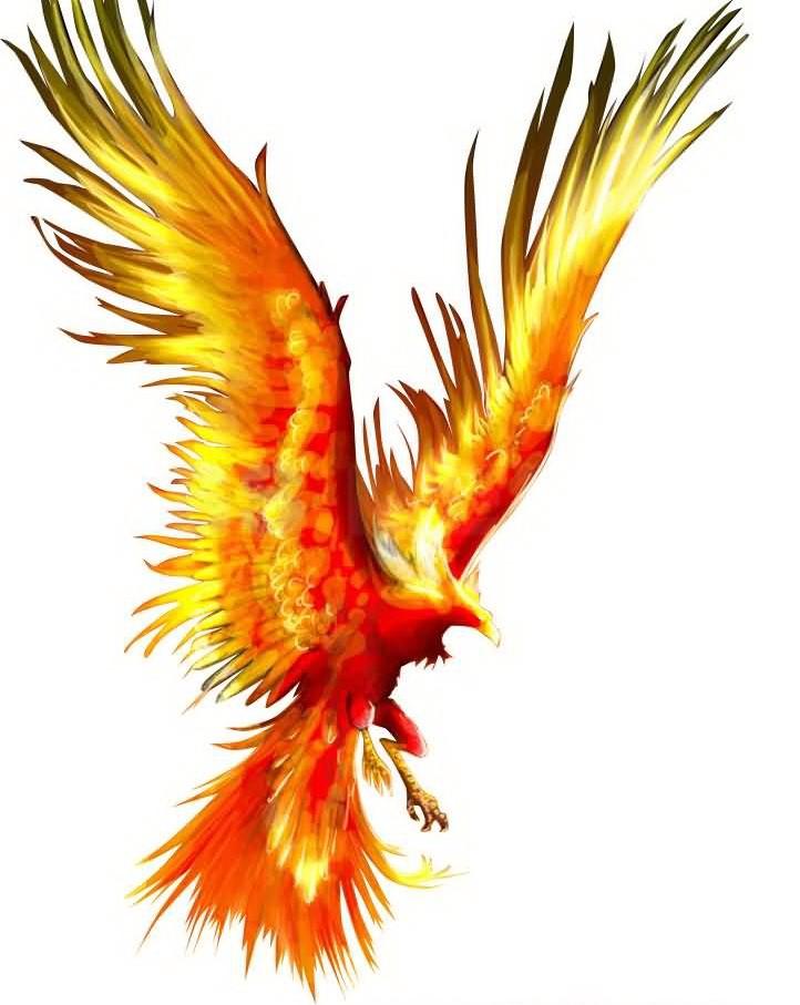 Fire flying phoenix tattoo design - Photo de phenix ...