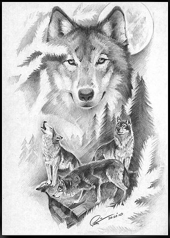 Friendly wolf flock in pine-tree branches frame tattoo design