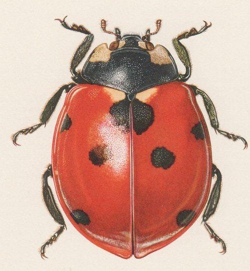 Gigant realistic ladybug tattoo design