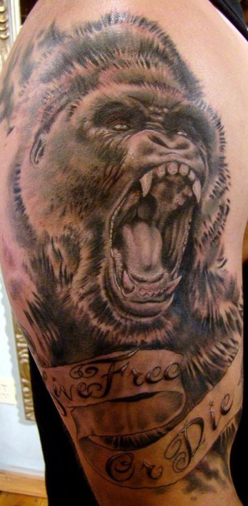 Gnarling gorilla head with ribboned lettering tattoo on upper arm