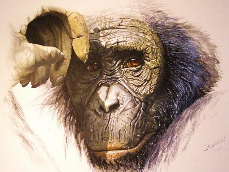 Good colorful dreaming chimpanzee tattoo design