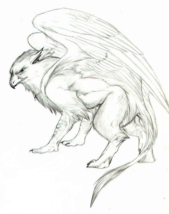 Good pencilwork griffin silhouette without coloring tattoo design