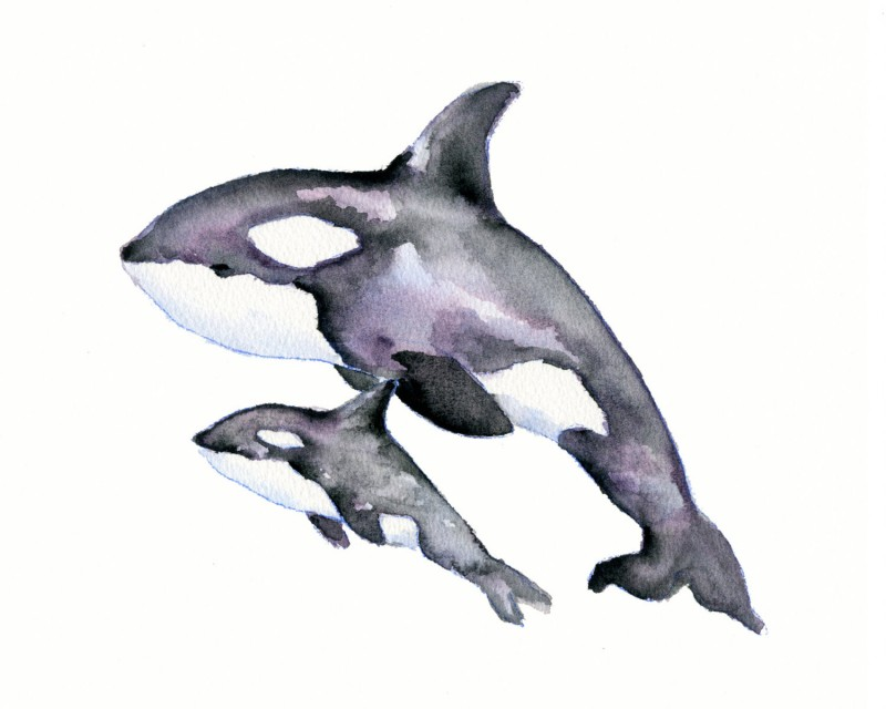 Good watercolor jumping whale family tattoo design