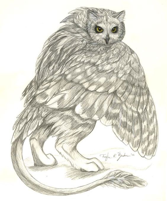 Goon pencilwork griffin with an owl head tattoo design