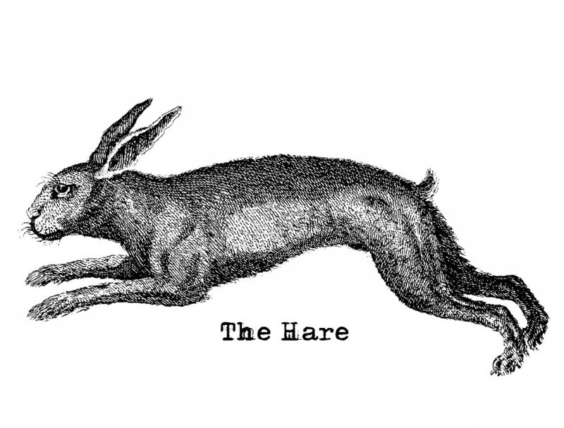 Gorgeous black-and-white long running hare tattoo design