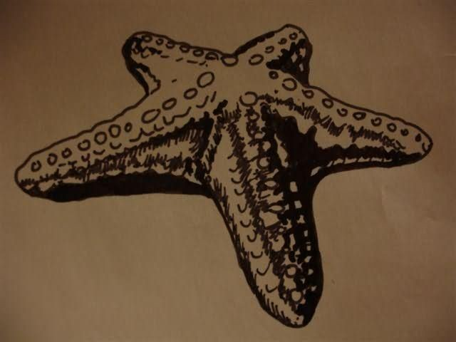 Gorgeous black-and-white volume starfish tattoo design
