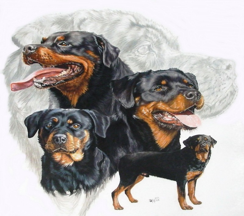Gorgeous colorful rottweiler collage tattoo design