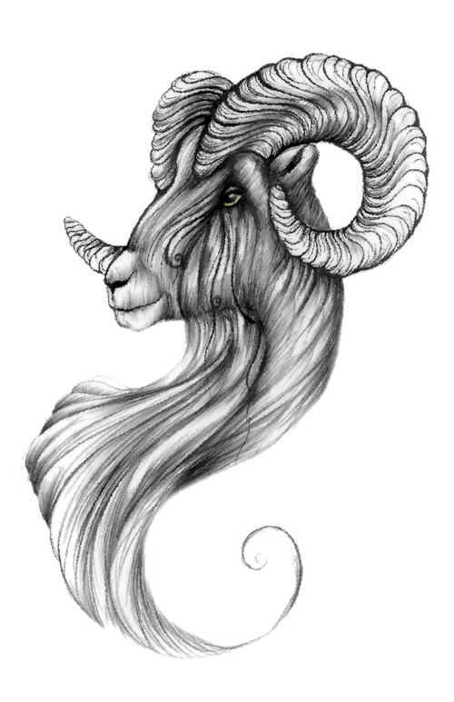 Gorgeous grey-ink ram with curled fur tattoo design