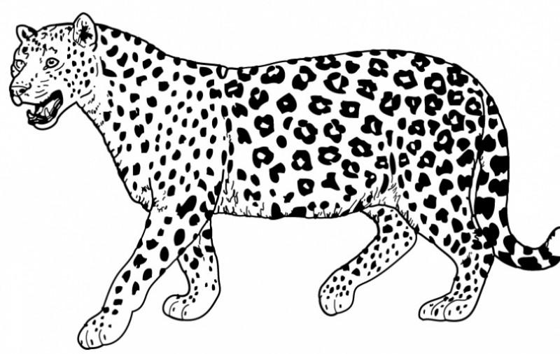 Great black-and-white walking jaguar tattoo design