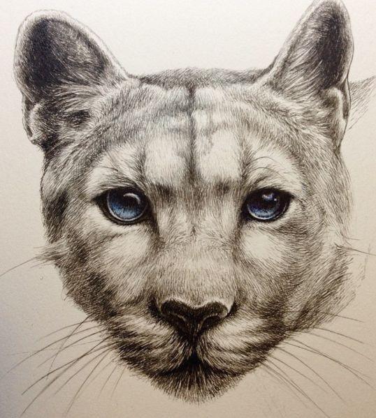 Great blue-eyed animal muzzle tattoo design
