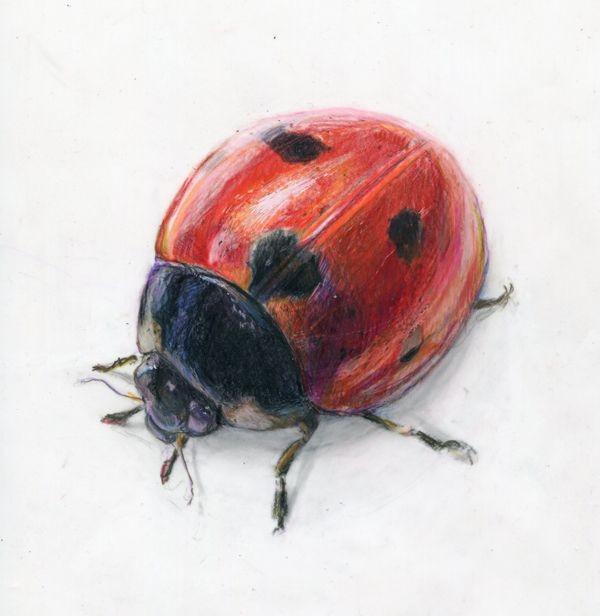 Great realistic colorful crawling ladybug tattoo design