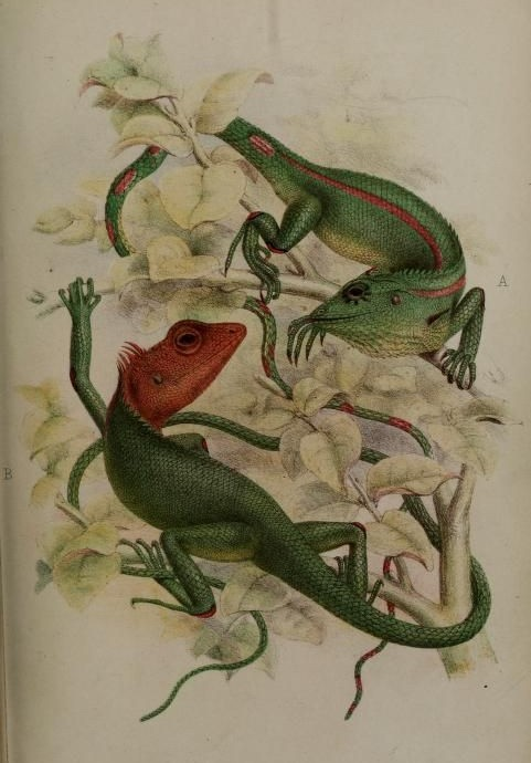 Green reptile couple with red heads crawling on yellow-leaved branches tattoo design