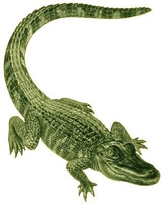 Green smiling crawling reptile tattoo design