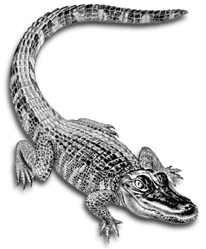 Grey-and-black smiling reptile tattoo design