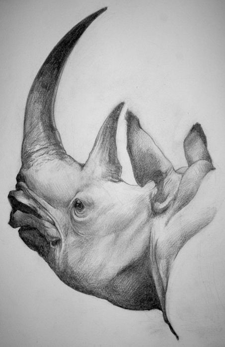 Grey-ink dreaming rhino head with sharp horns tattoo design