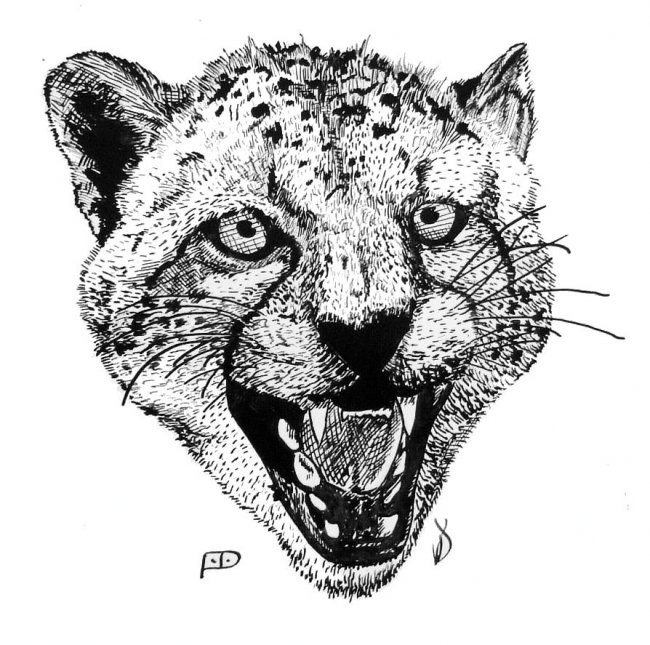 Grey-ink screaming cheetah head tattoo design