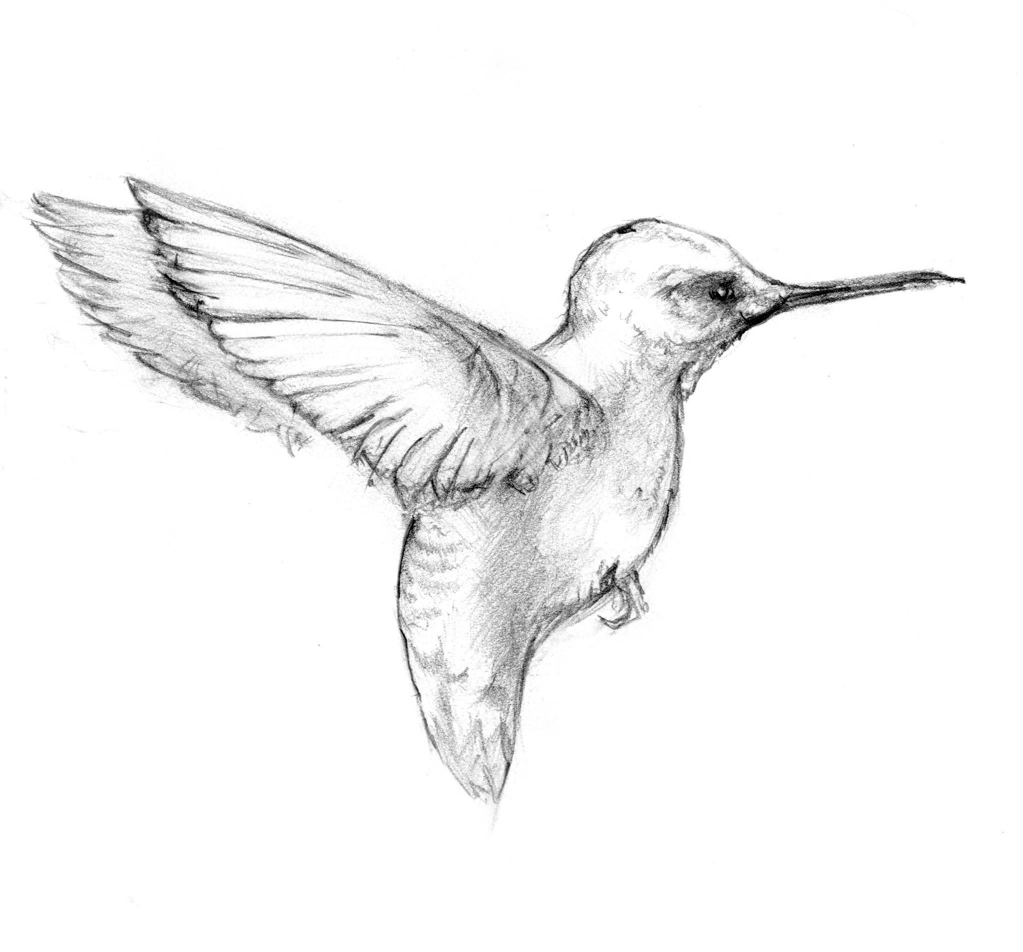 Grey pencil flying hummingbird tattoo design