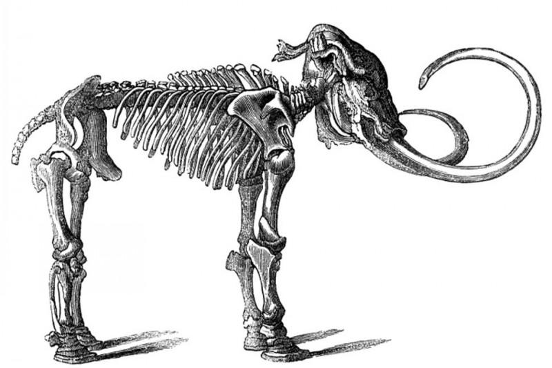 Grey die-hard standing mammoth skeleton tattoo design