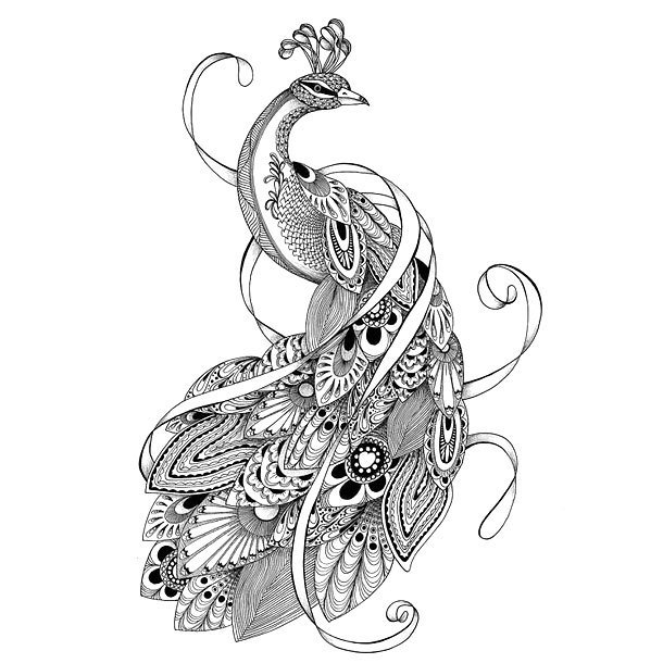 Grey ornate peacock with curled stripes tattoo design