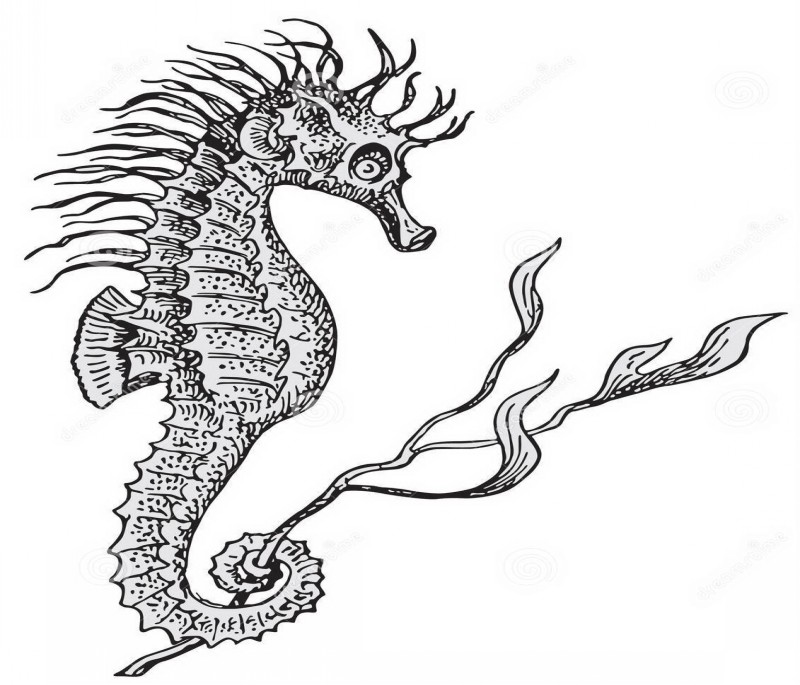Grey seahorse keeping a weed with tail tattoo design