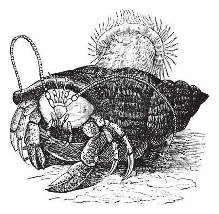Hermit crab dragging sea anemones tattoo design