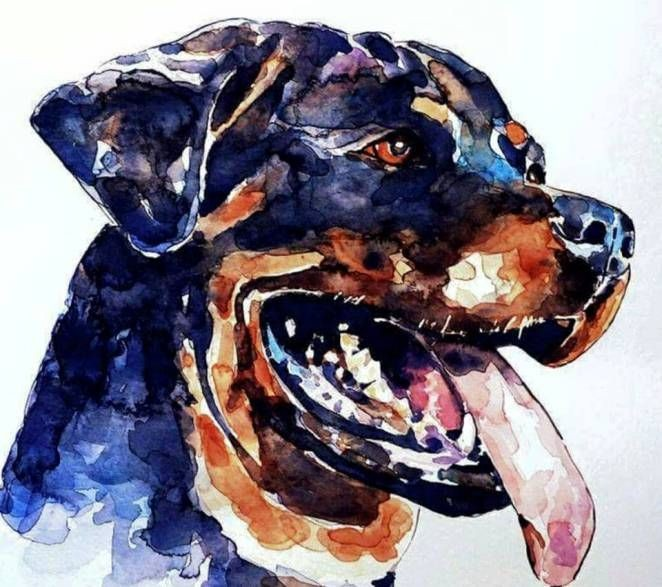 Impressive watercolor rottweiler head tattoo design