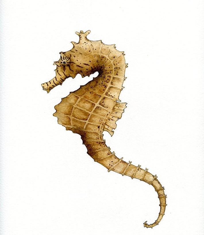 Light brown swimming seahorse tattoo design