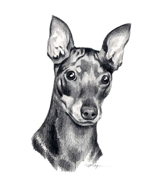 Lovely grey-ink doberman portrait tattoo design