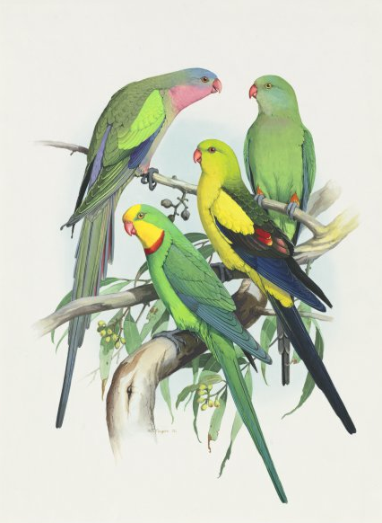 Lovely realistic green-color resting parrot flock tattoo design