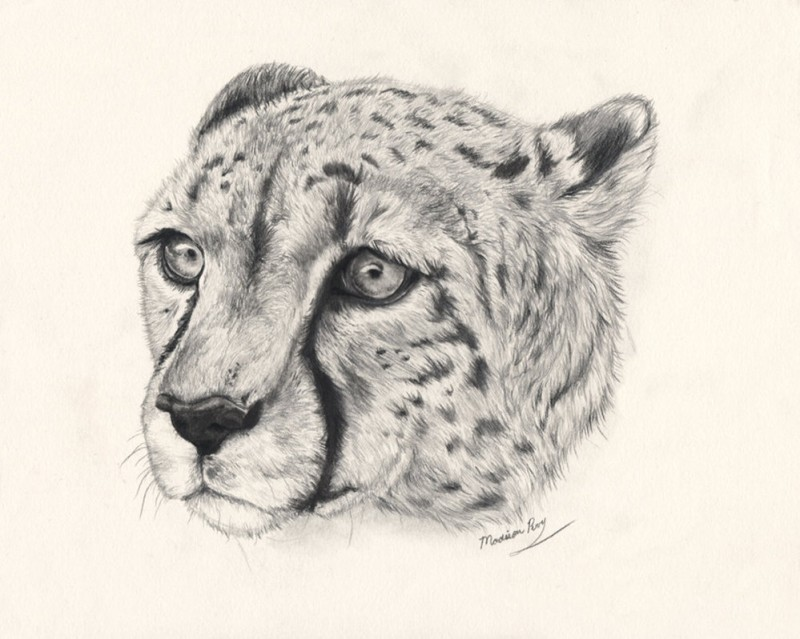 Lovely realistic grey-ink cheetah head tattoo design by Hasanti
