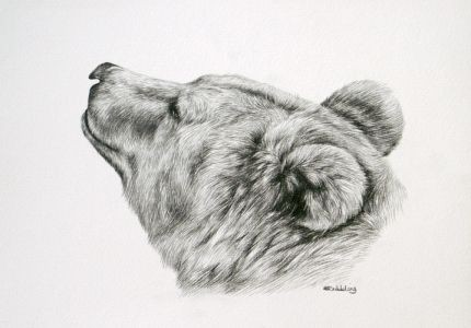 Lovely realistic grey-ink grizzly head in profile tattoo design